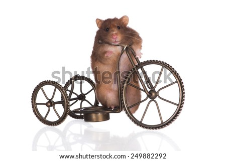 brown hamster on a bicycle - stock photo