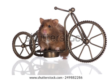 brown hamster sitting on a bicycle - stock photo