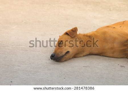 Brown homeless dog sleeping on the floor - stock photo