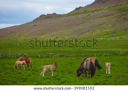 Brown Horse and Her Foal in a Green Field of Grass - stock photo