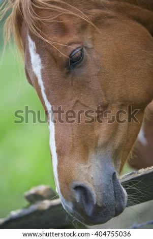 Brown Horse at a fence, countryside
