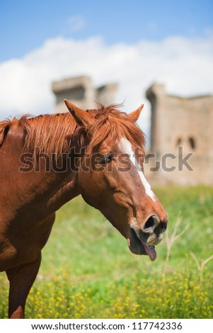 brown horse contorts funny faces and sticks out his tongue against the background of green grass and blue sky