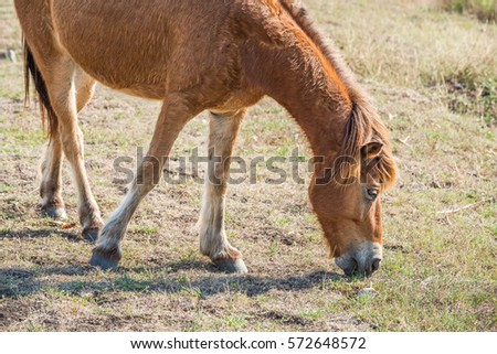 Brown horse eating grass on the ground