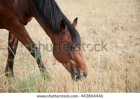 Brown horse eating on meadow