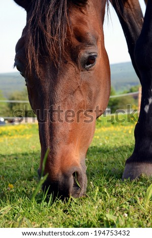 Brown horse eats - stock photo