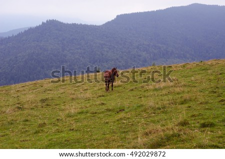 Brown horse grazing on a pasture in a mountain meadow