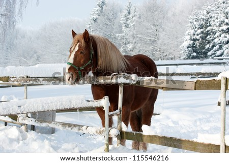 Brown horse in a cold winter pasture - stock photo