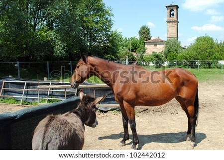 brown horse in a cowshed, concept of captivity - stock photo