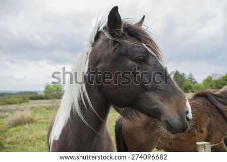Brown horse in a field - stock photo