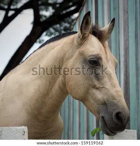 Brown horse in a stable, surrounded by walls of white concrete. - stock photo