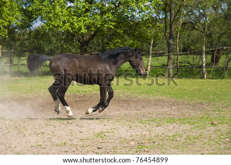 Brown horse in jump - stock photo
