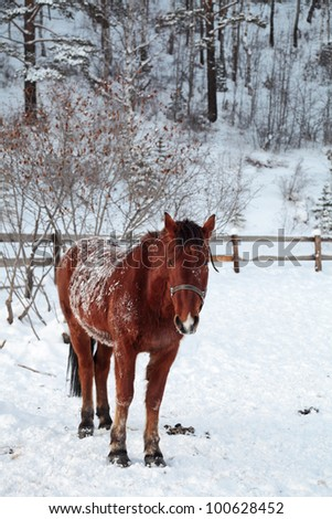 Brown horse in the paddock in the winter - stock photo