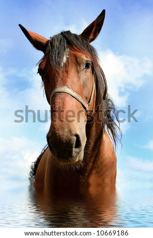 brown horse in water - stock photo