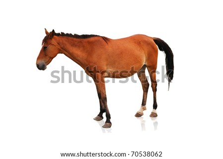 Brown horse isolated on the white background - stock photo