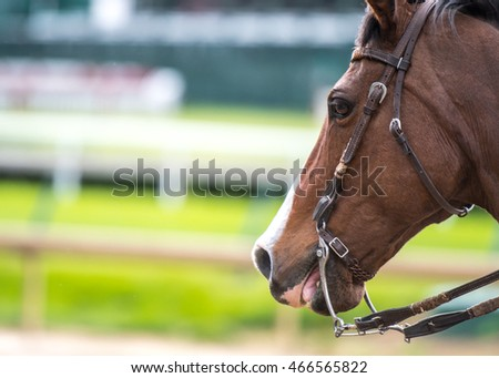 Brown Horse Licks Lips with green grass track in background