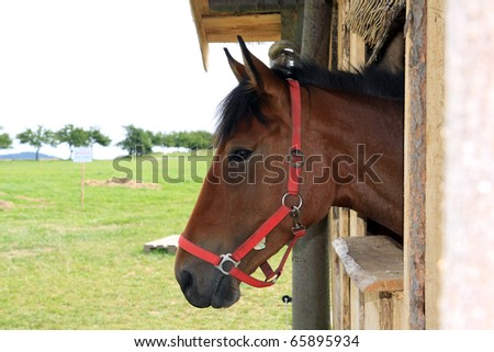 brown horse looking with from windows stable - stock photo