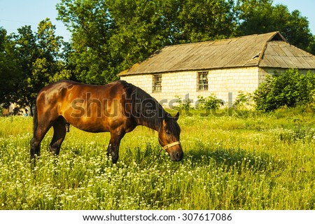 brown horse on a background of green field - stock photo