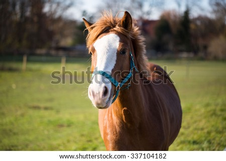 brown horse on a coupler - stock photo