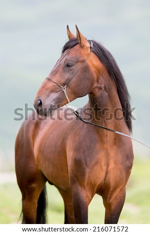 Brown horse portrait standing close up. - stock photo