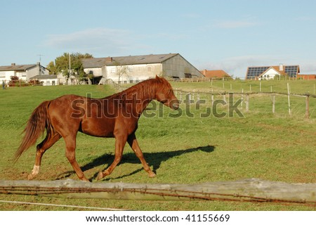Brown horse running through the pasture. - stock photo