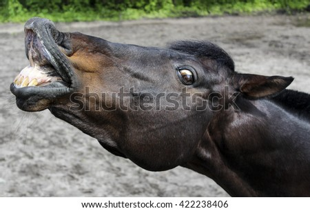 brown horse stretched his lips while standing in the paddock