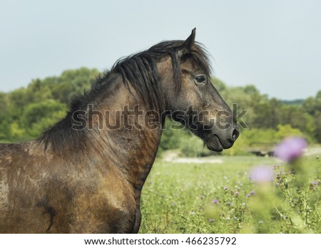 brown horse with a long black mane are standing on the green trees background