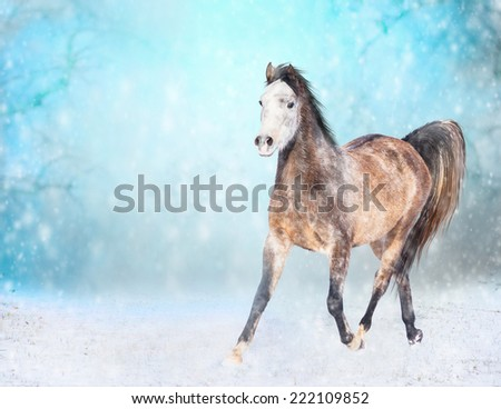 Brown horse with  white head runs trot in winter snowy field  - stock photo