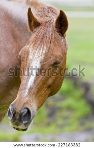brown horse with white markings turning its head to the side with its eyes closed - stock photo