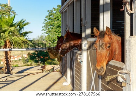 Brown horses in the stables at the farm - stock photo