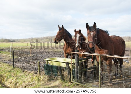 Brown horses looking over the fence - stock photo