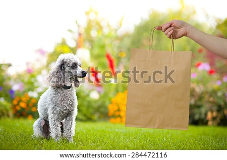 brown kraft bag with pretty poodles on green garden with flowers on background - stock photo