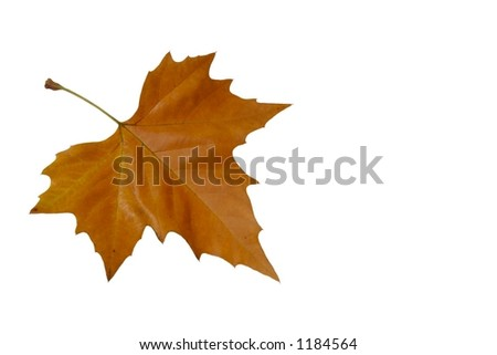 brown leaf - stock photo