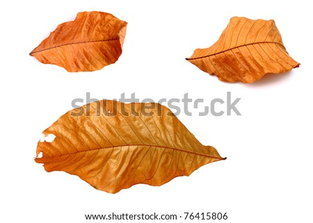 Brown leaf isolated on white