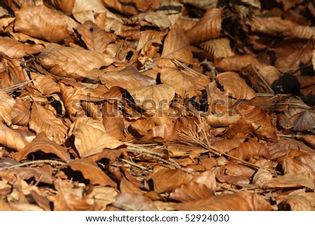 Brown leafs - stock photo