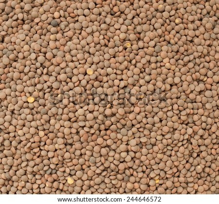 brown lentils - stock photo