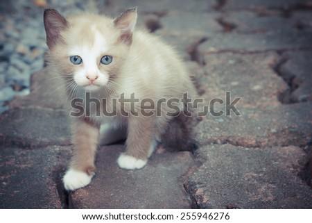 Brown little tabby kitten cute. - stock photo