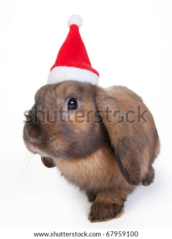 brown lop eared dwarf rabbit in santa, isolated - stock photo