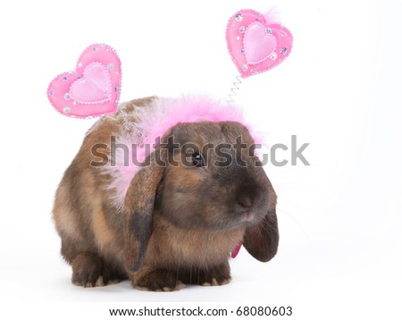 brown lop eared dwarf rabbit wearing pink hearts headband, isolated - stock photo