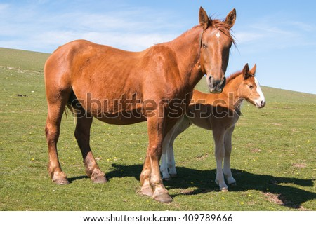 Brown mare with baby horse on mountain farm. - stock photo