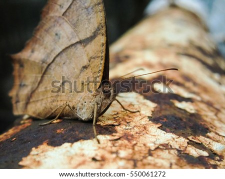 Brown moth macro on rusty corroded pipe