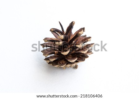 brown pine cones isolated on white background