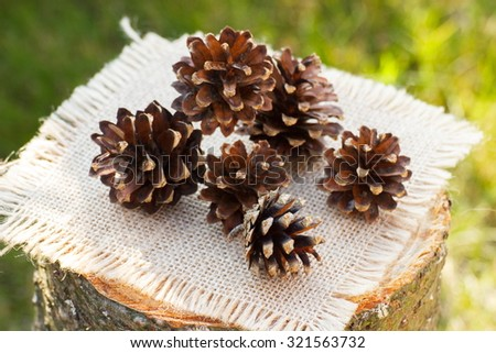 Brown pine cones on wooden stump in garden on sunny day