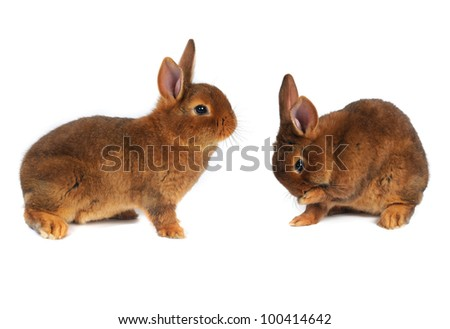 brown rabbit wash on white background - stock photo