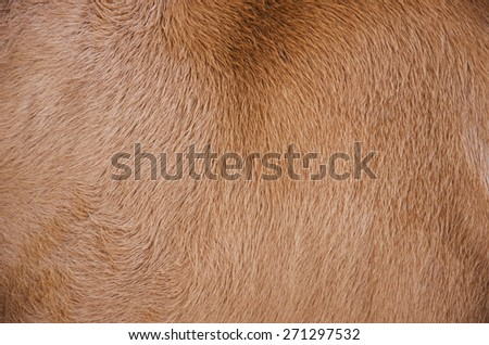brown skin texture background - stock photo
