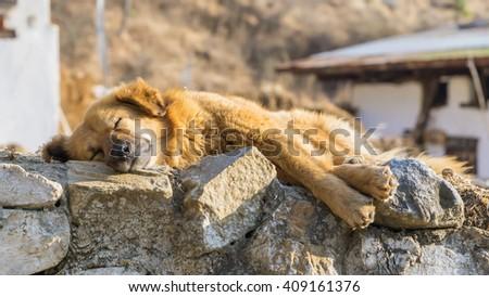 Brown sleeping dog on stone wall - stock photo