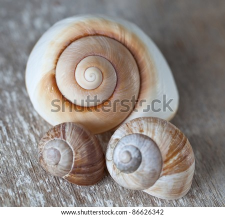 Brown snail shells in deifferent sizes and empty