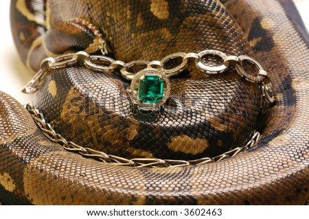 Brown snake with modern jewelrys 3 - stock photo