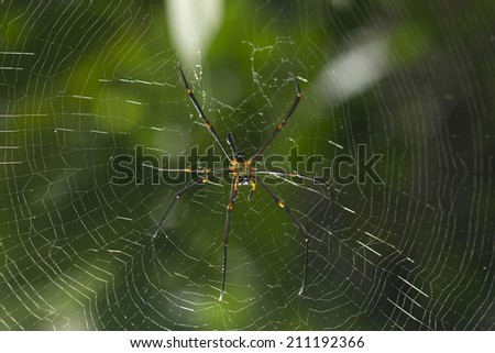 Brown spider in the center of a spider web - stock photo