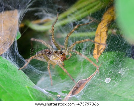 brown spider on a nests