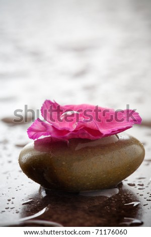 Brown stones with flower petals and water drops - stock photo